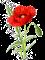 poppy-1525814_640
